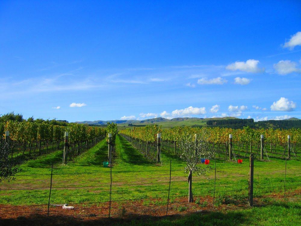 Nieuw Zeeland: wijnen op de drempel van faam