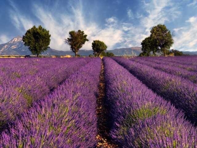 Provence wijnen: plezierwijnen... er is niks mis mee