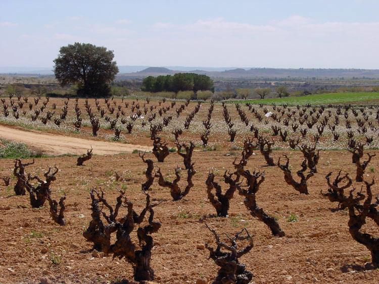 Kruiden en wijn: tempranillo proeverij
