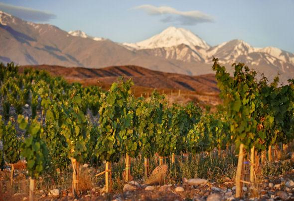 Cool climate wijnen