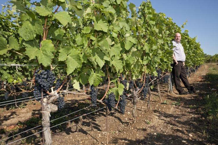 MIgranten druiven proeverij: Zinfandel maakt indruk in Zuid Frankrijk