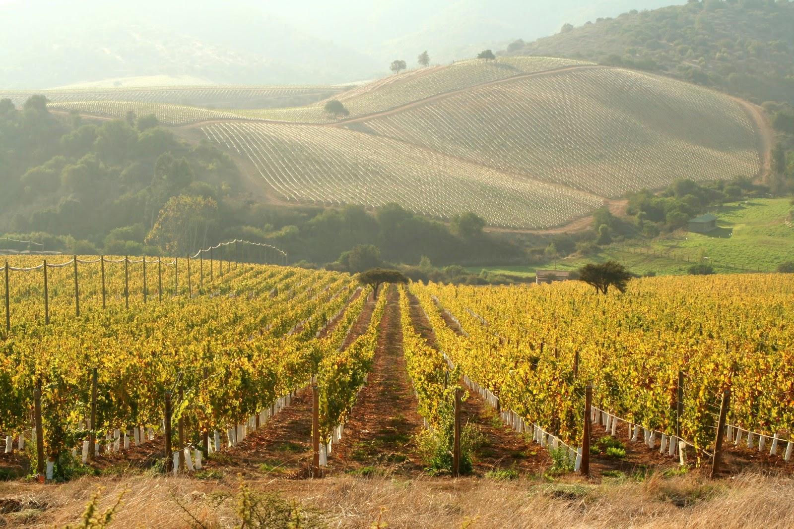 Terroir en wijnproductie, betalen we de prijs?