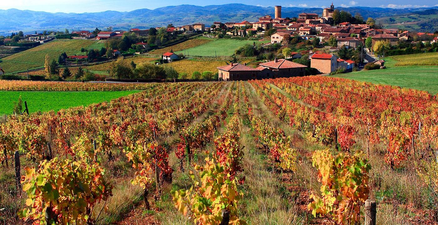 Crus de Beaujolais: proeven we wel dezelfde wijn?