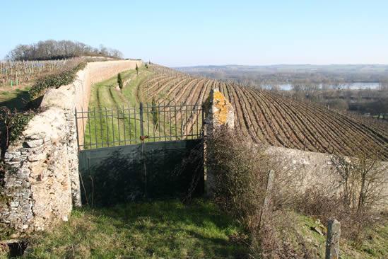 Loire wijnen: waardering tonen voor karakter en weerbarstigheid