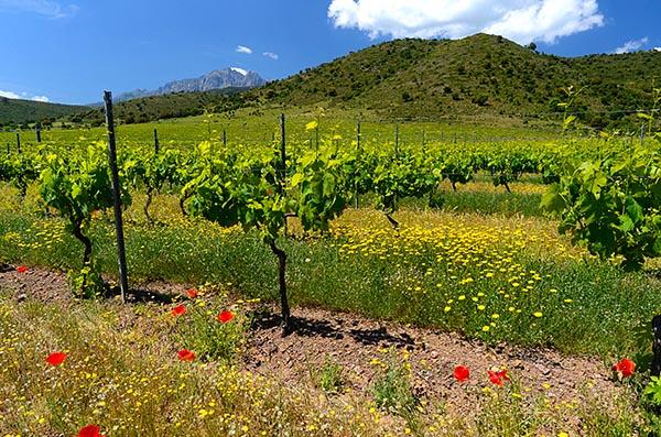 Corsica en Sardinië, ontdekkingsreizen-in-het-glas
