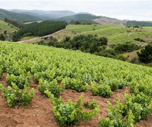 Is de wijngaard bepalend voor onze topwijnen? Neuh, we zagen aan de tafelpoten van onze zekerheden.