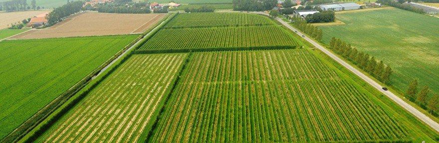 Nederlandse wijnen: gewoon dóórgaan, dóórgaan