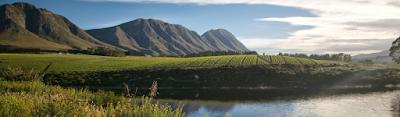 Wijn van Franse druiven op Zuid-Afrikaanse grond (maidenproeverij)