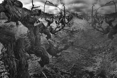 Avant Garde wijnen van The Standish imponeren