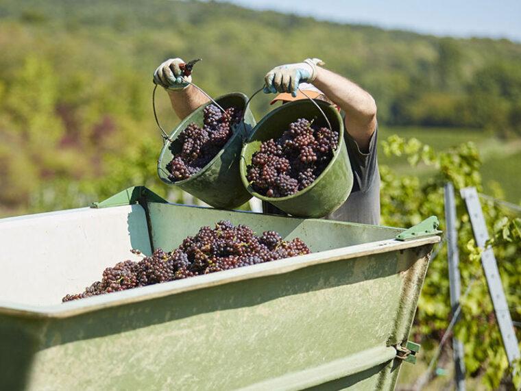 Blindproeven van een breed spectrum wijnen uit Rheinhessen en Pfalz