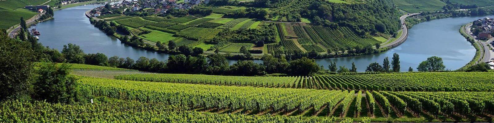 Luxemburgse wijngaarden langs de Moezel